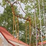 Världens äldsta träd. Anuradhapura (U)