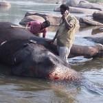Tempelelefanten Laxhmi. Hampi