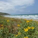 Havet vid Kamiros