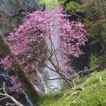 Vattenfallet Kegon. Nikko