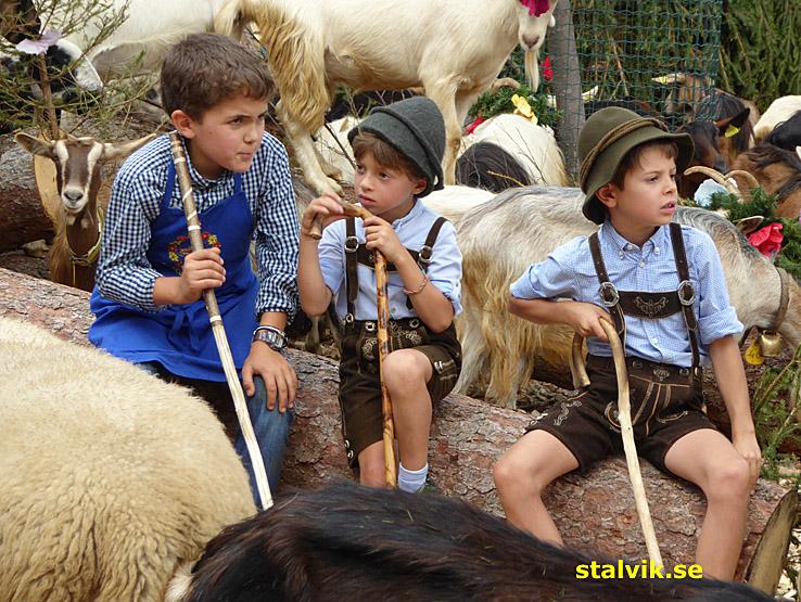 """Unga """"fåraherdar"""". Cavalese"""