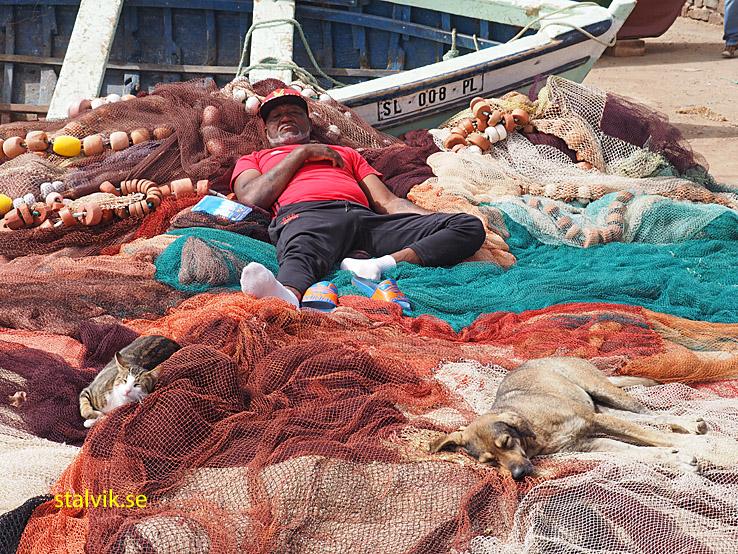 Vilande fiskare. Palmeira