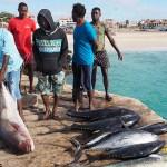 Inför fiskförsäljningen. Santa Maria