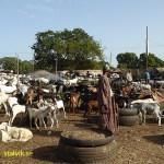 Boskapsmarknaden. Abuko