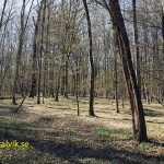 Bialowieza Naturreservat. Vitryssland (U)