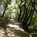 Vandringsleden Santuario di Montallegro - Chiavari