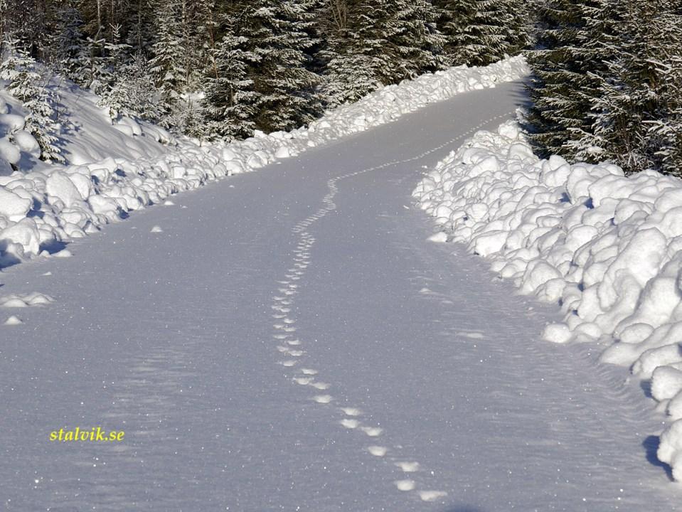Vinter i Dalarna. Hökfallet