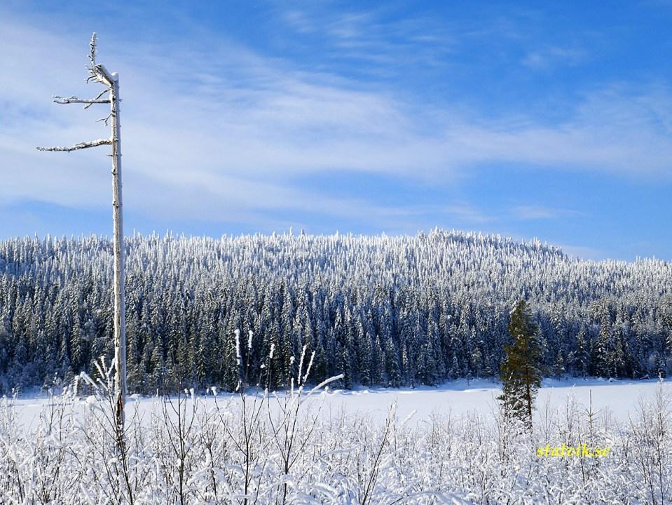 Vinter i Dalarna. Säfsen