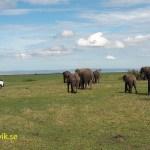 """Where the big animals roam."" Masai Mara"