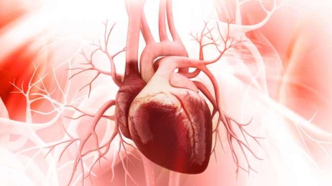 Human heart illustration (Shutterstock).