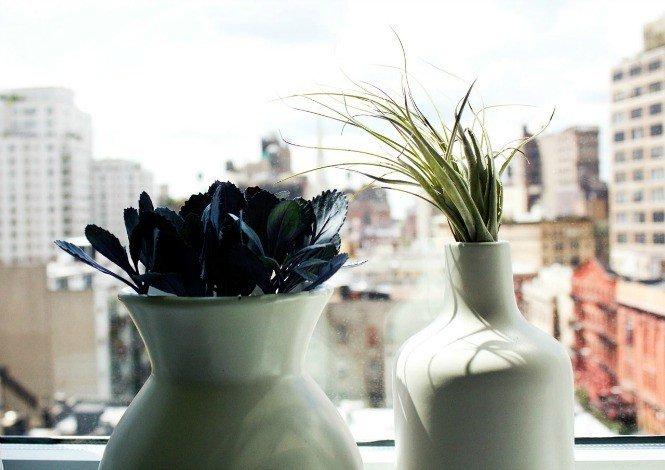 3_Ukrasite biljkama moderni enterijer