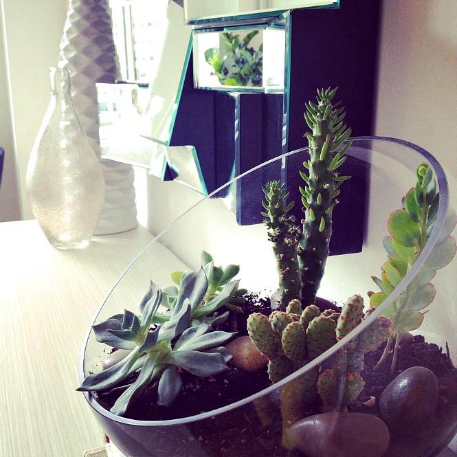 4_Ukrasite biljkama moderni enterijer