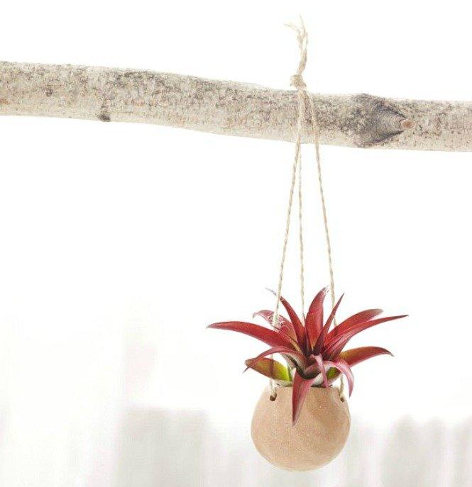 9_Ukrasite biljkama moderni enterijer(1)