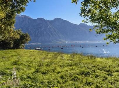 Urbanizovano zemljiste na samoj obali mora - Drazin Vrt, Kotor