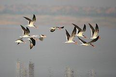 Chambal River Safari from Agra
