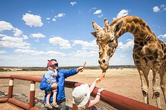 Giraffe Safari and a day at Monarto Zoo