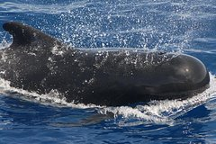 Tenerife Private Luxury Charter with Snorkeling Stop