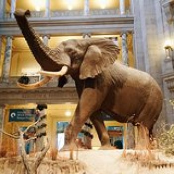 Washington DC District of Columbia Smithsonian Museum of Natural History Guided Tour - Semi-Private 8ppl Max 40048P27