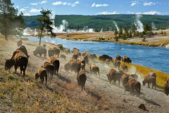 5 Days Yellowstone In-Depth, Grand Teton, Jackson & SLC Tour from Salt Lake City