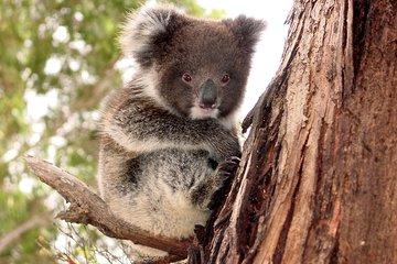 Kangaroo Island Luxury Small Group 'Island Life' Full Day Tour