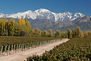 4-Day Trip to Mendoza by Air from Buenos Aires