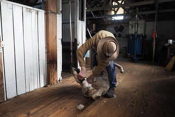 Sovereign Hill Heritage Sheep Farm Experience and Ballarat Gold Rush Day Tour from Melbourne