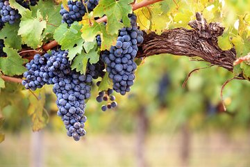 Best Organic Wineries Tour Plus Local Lunch from Barcelona