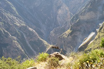 Trekking challenge in the Colca Canyon - 3Days