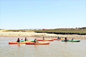 Hilton Head Island Guided Kayaking Eco Tour