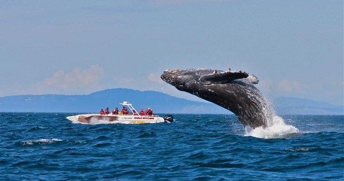 Disfruta de un día completo en Samana 3 por 1 Avistamiento de ballenas: la  cascada del limón-Cayo Levantado | Punta Cana | 2021 | Viator