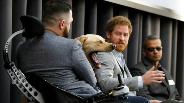 [TLMD - NATL] Perros virales, los protagonistas de las noticias