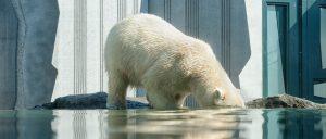 New E book Exposes How Evolutionary 'Science' Devolves