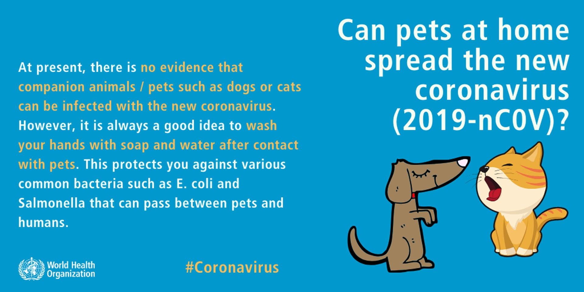 Coronavirus En Perros Que Debemos Saber En Further Es