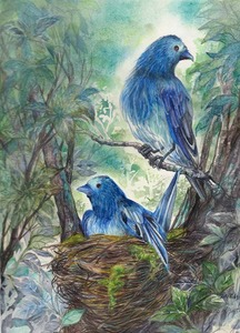 「Blue Birds Ⅲ [抱卵]」