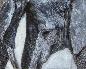 「ゾウの親子」