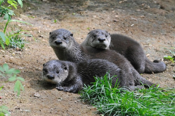 New zoo animals: Baby animals rated by cuteness (SLIDE SHOW)