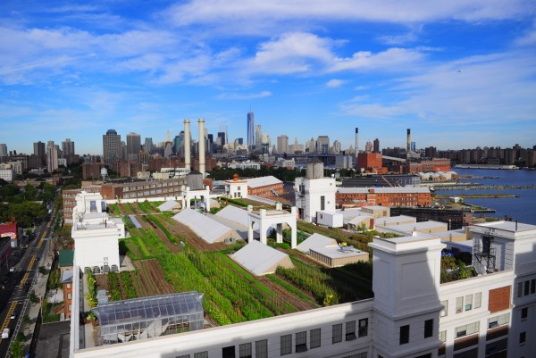 rooftop garden brooklyn Best rooftop gardens and urban farms in NYC including