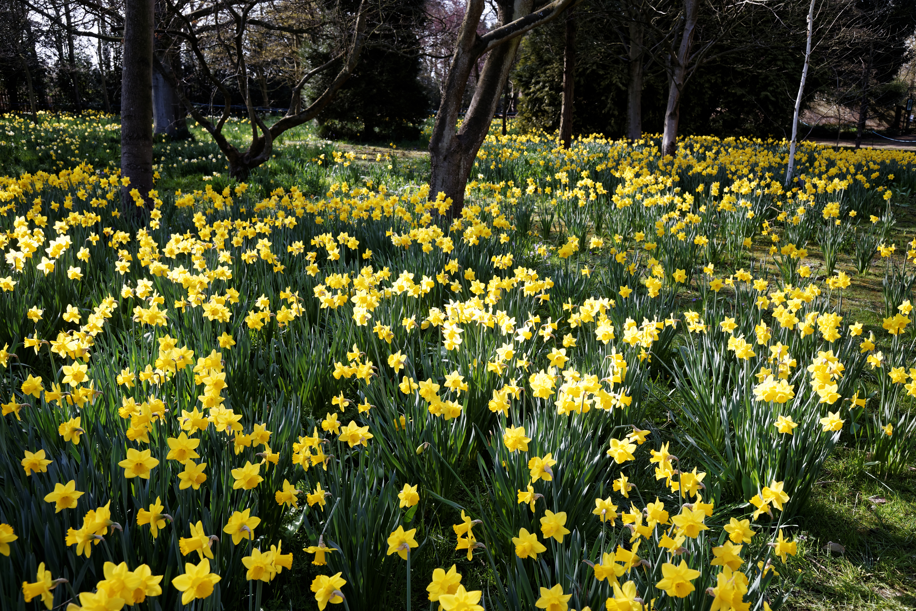 Six Signs That Spring Is Nearly Here
