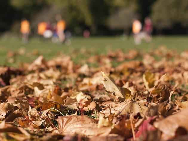 Battersea Park in autumn