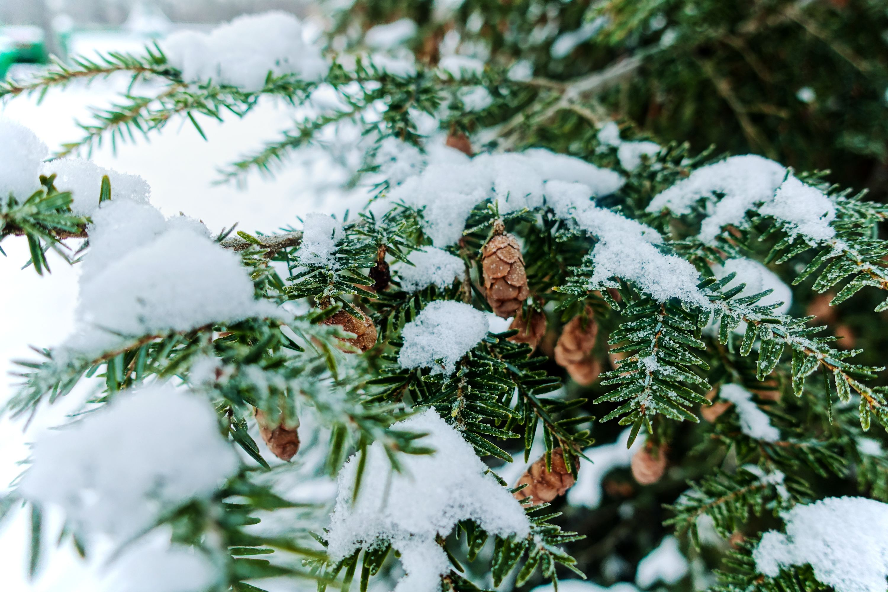 10 Best Christmas Tree Farms For NYC Families