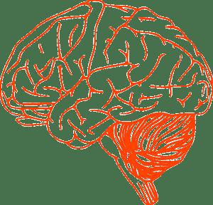 brain-305774_640