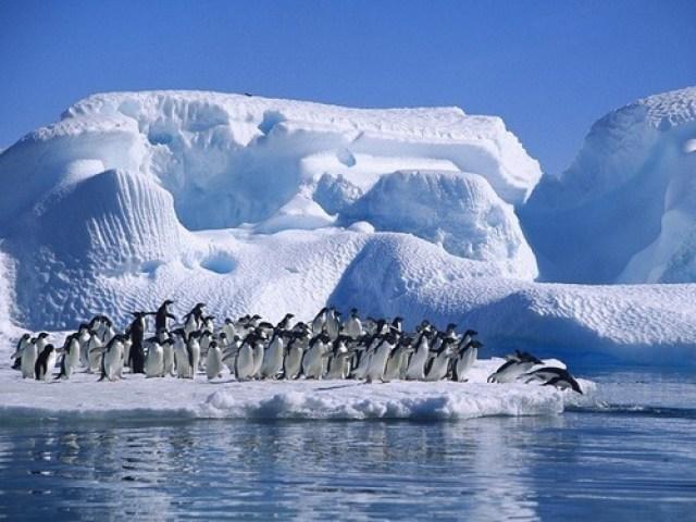 pingüinos al mar