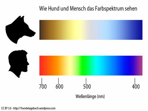 Können Hunde Farben Sehen