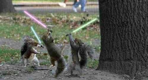 squirrel wars