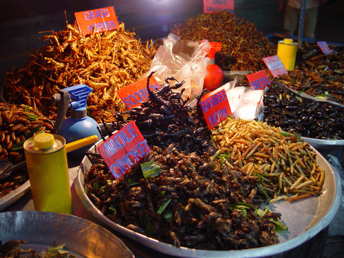 Lovely Grub: Are Insects The Future Of Food?
