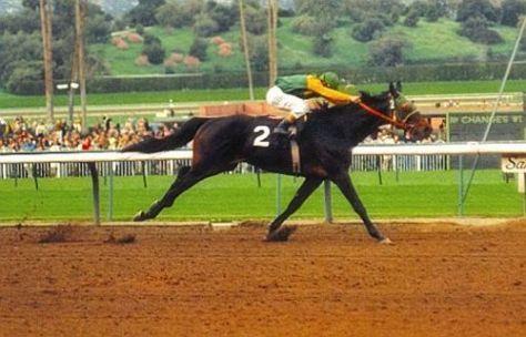 Sham - famous racehorses