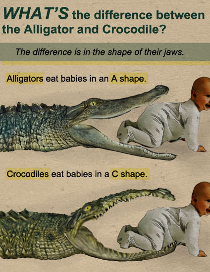 What's The Difference Between The Alligator And Crocodile?