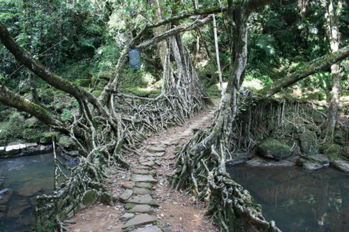 nature bridge