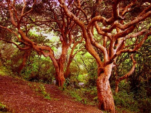 Bosques nativos - Queñuales