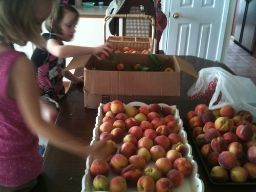 Eating Local - Peaches from a friend's farm